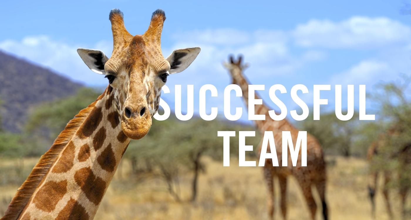 1 Successful Team